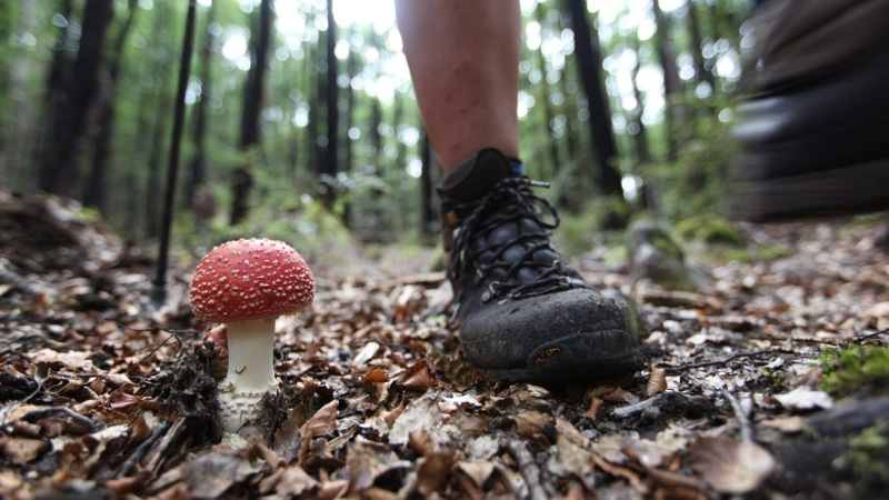 Don't Step on the Cute Toadstool
