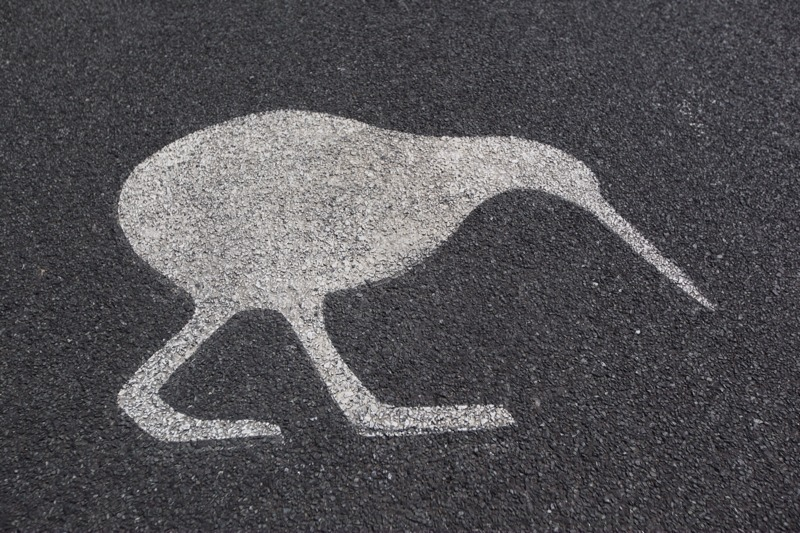 Kiwi painted on the road
